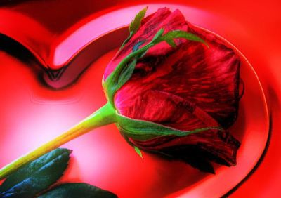 valentines-day-rose-large-content