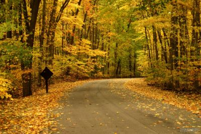_autumn_road-content